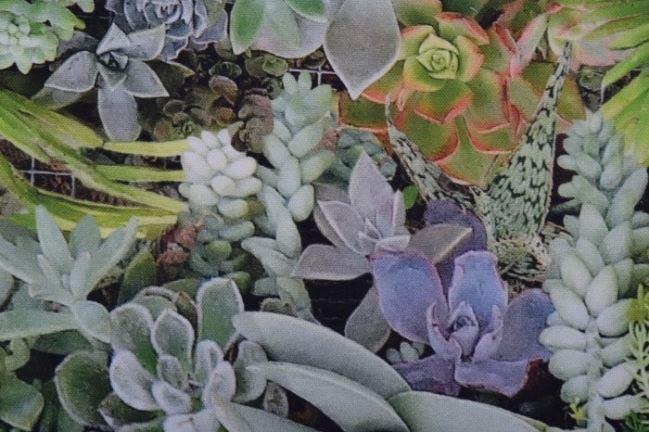 Tkanina dekoracyjna z cyfrowym nadrukiem skalnych roślin 1324/025